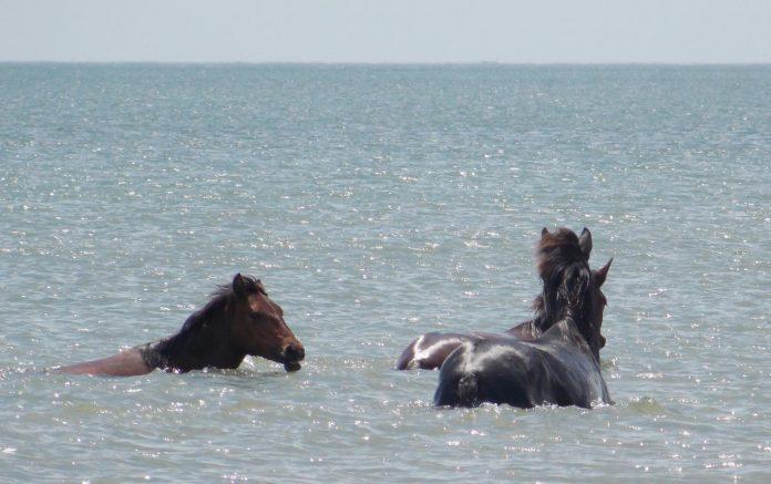 Cai salbatici in Marea Neagra
